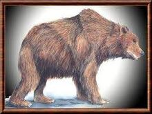 Ursus etruscus1.jpg