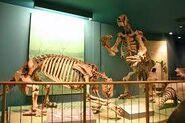 Два скелета эремотерия