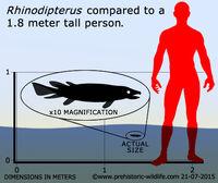 Rhinodipterus-size