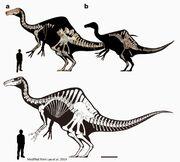 Deinocheirus skeleton.jpg