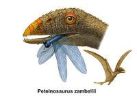 Peteinosaurus2
