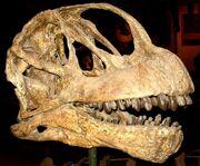 800px-Camarasaurus lentus.jpg