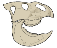Уданоцератопс череп