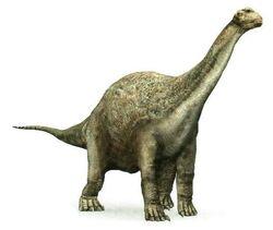 Camarasaurus 43792 4852