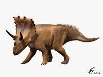 AgujaceratopsNT d079.jpg