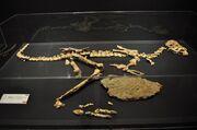Rinchenia fossils.jpg