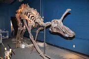 Циньтаозавр 13.jpg