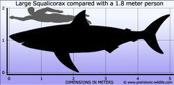 Squalicorax-size