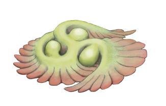 Трибрахидий