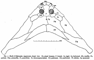Douthitt Diplocaulus skull diagram.png