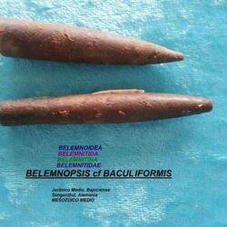 Белемнопсис