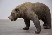 Ursus etruscus2.jpg