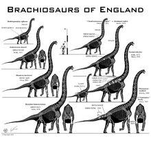 British brachiosaurs.jpg
