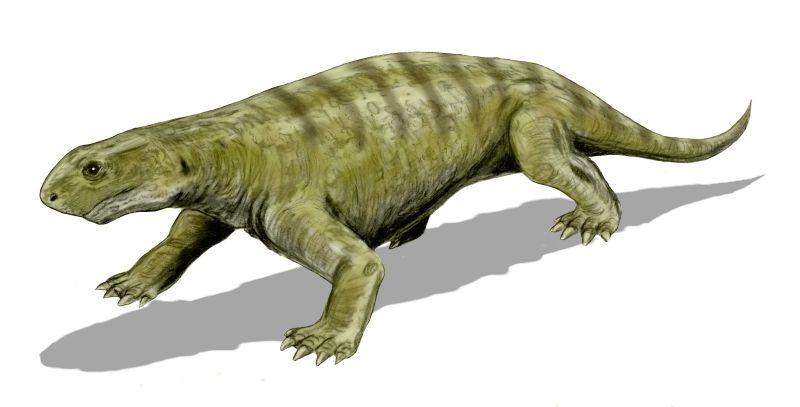 Эннатозавр