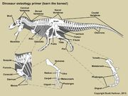Osteology guide.jpg