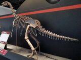 «Тяньтайзавр»