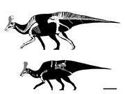 Tsintaosaurus skeleton.jpg