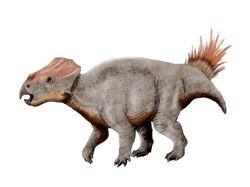 Ajkaceratops NT.jpg