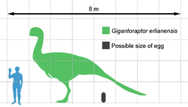 Gigantoraptor size.png