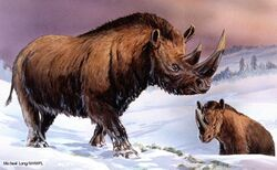 Шерстистый носорог 6