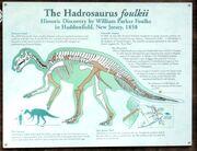Hadrosaurus foulki isign.jpg