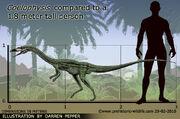 Coelophysis-size.jpg