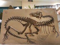 Gorgosaurus USNM 12814 (originally AMNH 5248)