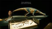 Adeopapposaurus skeleton.jpg
