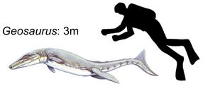 Geosaurus giganteus.png