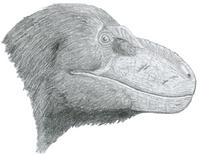 Nanuqsaurus 2