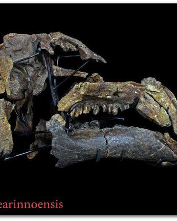 Proa valdearinnoensis skull 02.jpg
