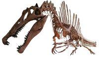 Spinosaurus white background 2