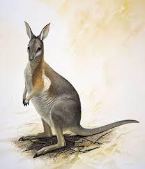 Луннокоготный кенгуру