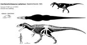 Carcharodontosaurus skeleton.png