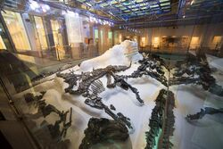 Iguanodon fossil 01