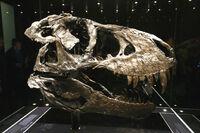 Tyrannosaurus Trystan 02.jpg