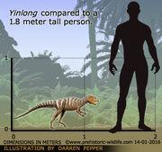 Yinlong-size.jpg