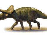 Тураноцератопс