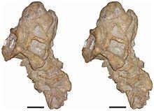 Bulbasaurus-13.jpg