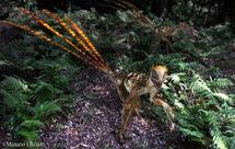 Epidexipteryx20110924 4