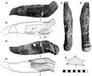 Гилеозавр 12.jpg