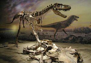 Альбертозавр3
