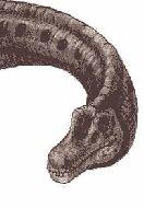 Лаплатазавр1.jpg