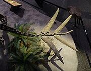 Гесперозавр 10.jpg