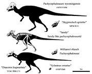Pachycephalosaurids.jpg