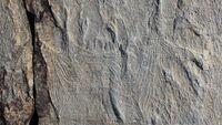 Haootia-quadriformis-fossil
