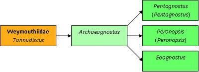 Archaeagnostus таксономия.jpg