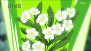 Kumojaki flower