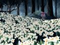 Sabiduria campo narcisos