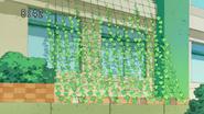 Cortina verde